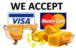 City Chick Payment Cards Accepted